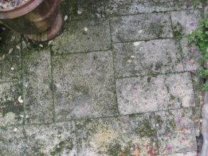 Nettoyage de terrasses par a rogommage et hydrogommage ou for Nettoyage terrasse eau de javel